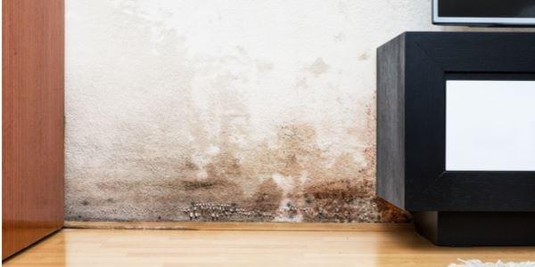 Mietminderung bei Schimmel in der Wohnung