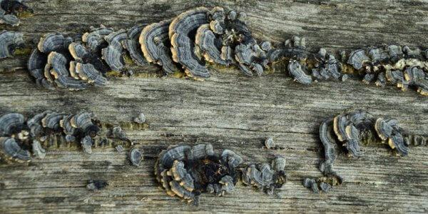 Holzzerstörende Pilze im Baubestand