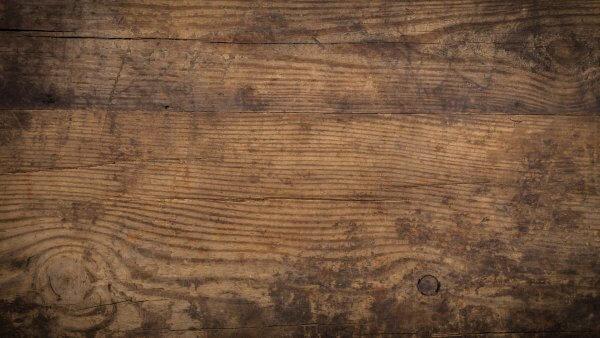Unter Holzvernichtern ein König: der Hausbock- bzw. Holzbockkäfer