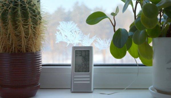 Die Wirkung von Zimmerpflanzen auf das Raumklima